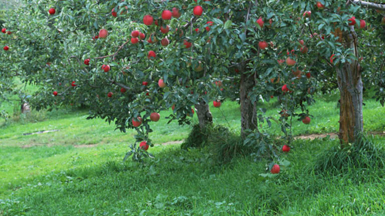 Tu B'Shevat - The First Green Holiday