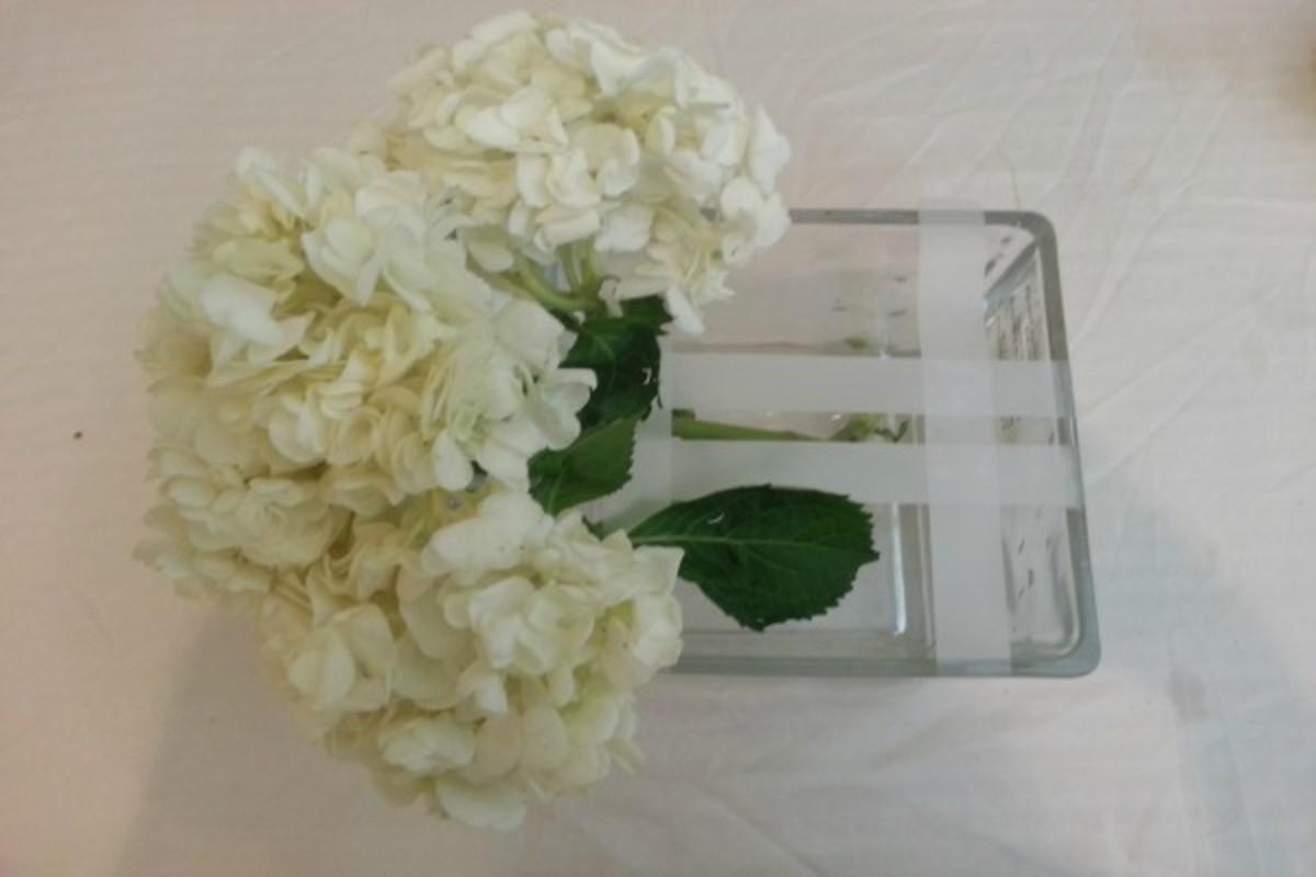 Flowers Hydragea 3