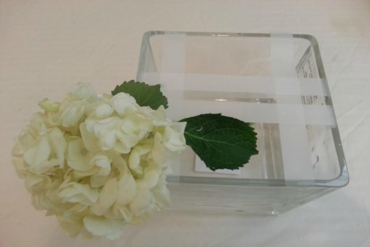 Flowers Hydragea 1