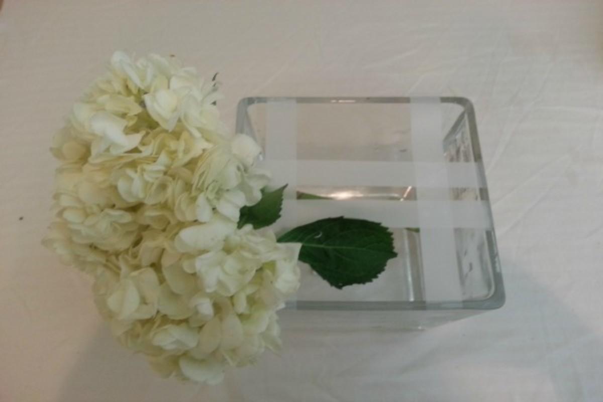 Flowers Hydragea 2