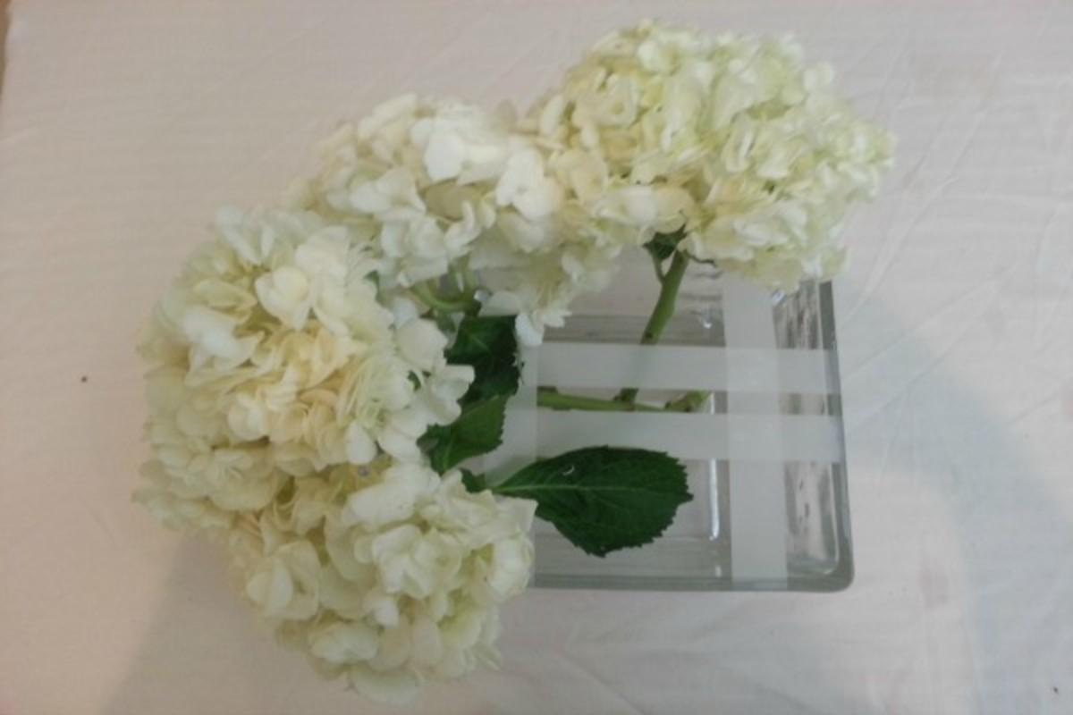 Flowers Hydragea 4