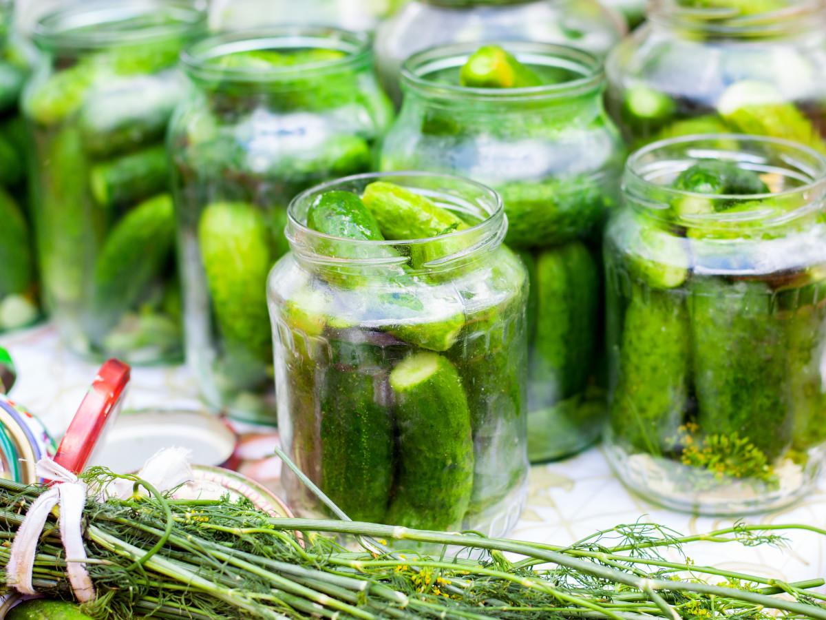 Crunchy Kosher Pickles